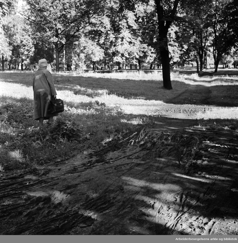 Sofienberg kirkegårdspark. September 1962