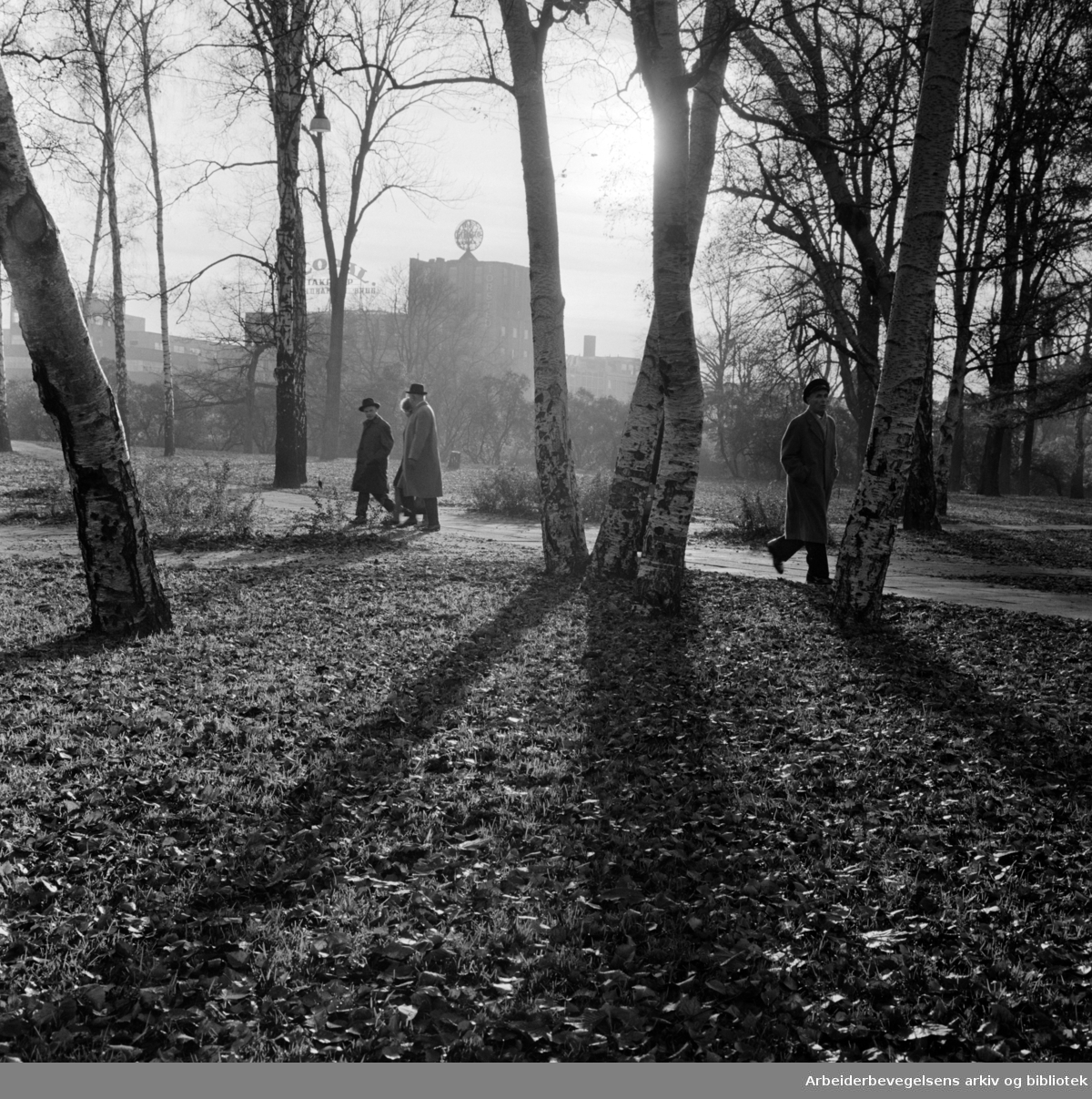 Slottsparken. November 1964