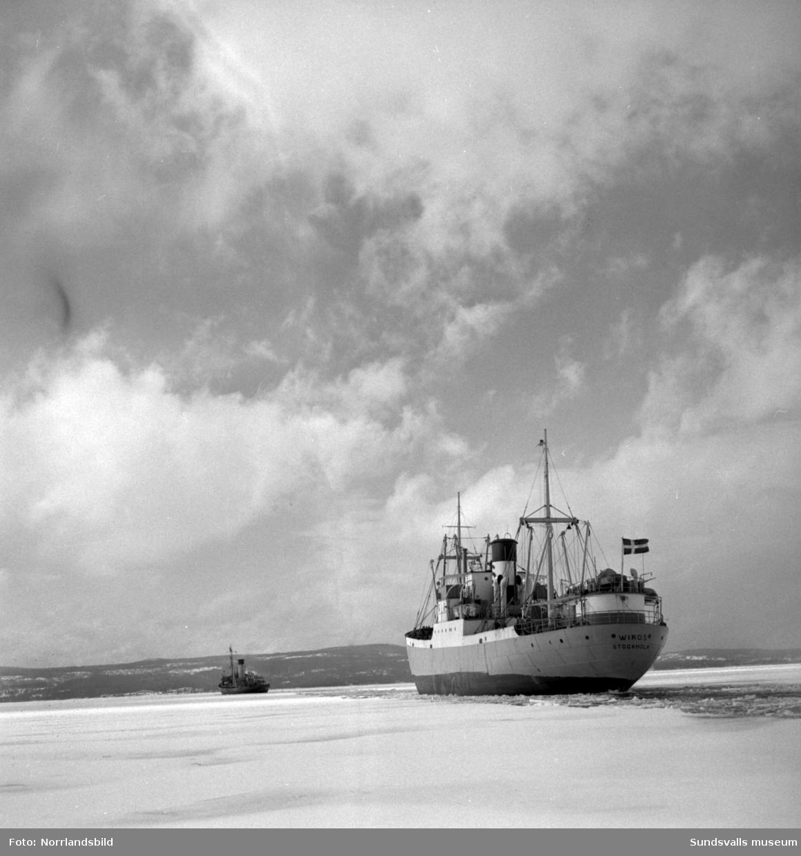 Isbrytaren Atle bryter isränna för Stockholmsbåten Wiros förbi fyren Draghällan och in mot Sundsvalls hamn.