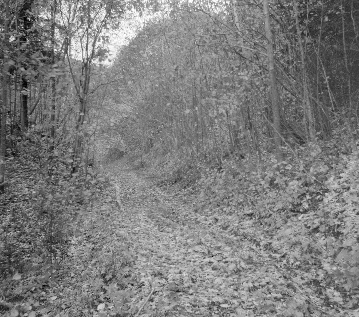 Langs traseen opp fra Tronstad bruk på nedlagte Lierbanen.