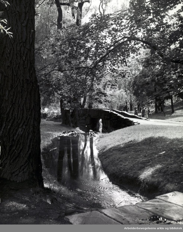 St. Hanshaugen, juni 1955.