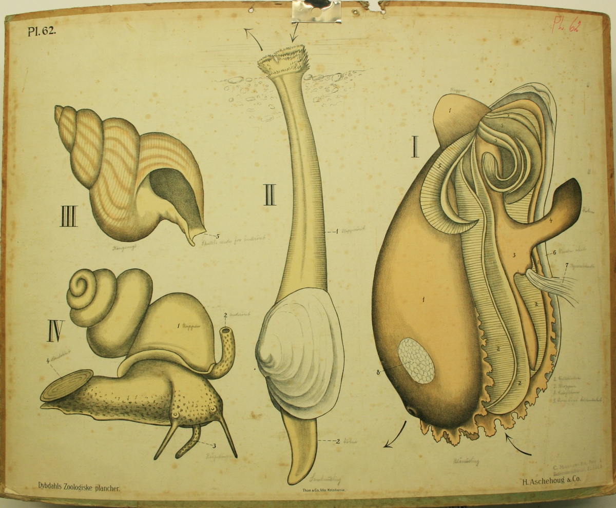 Sneglar og sneglehus
