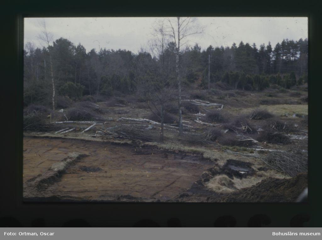 Norum 164, sankmarken öster om  mellersta gården efter att norra gården avbannats men innan mellersta gården banas av Fotograferat från norr
