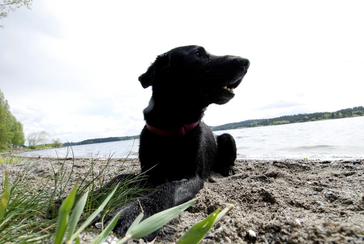 Hunden Chico på tur ligger på bredden av et vann