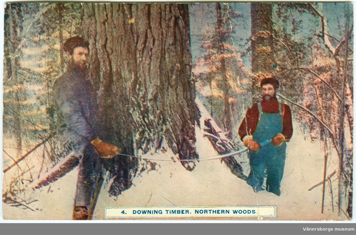 "Vykort. ""Downing timber northern woods"""