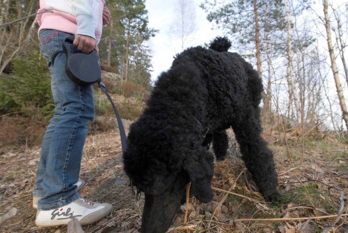 Hunden Pedro på sammen med et barn i familien.