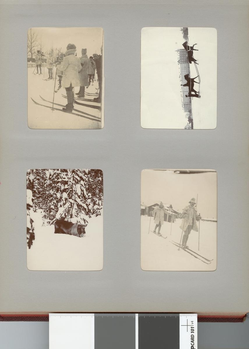 Ren i vinterlandskap, Norrbotten omkring 1910.