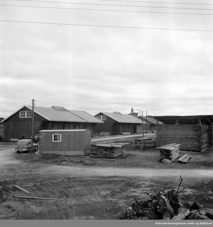Haraldrud skogbruk. Haraldrud bruk. Oktober 1952