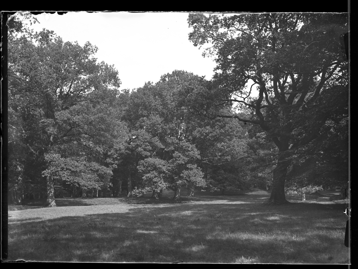 Gräs och träddungar i Nolhaga park.