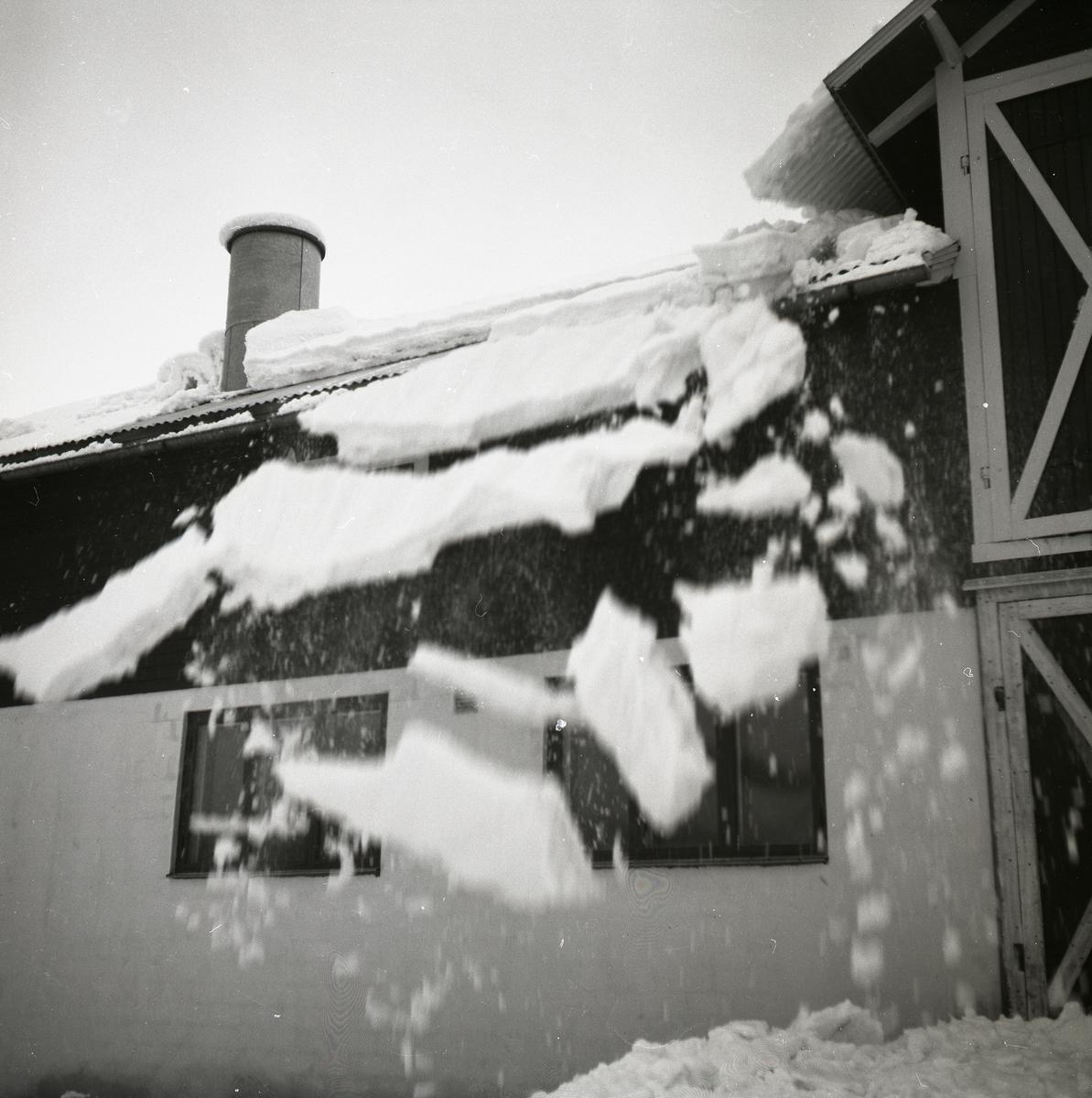 Snöras från tak vid gården Peranders i Norrfly, februari 1955.