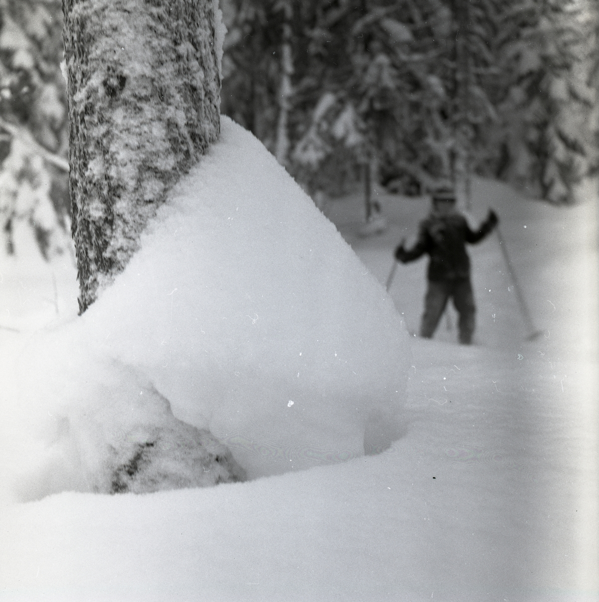 "Ett träd med snödriva mot stammen, ""snökrage"", på Heden 23 december 1955. I bakgrunden syns en pojke som åker skidor."