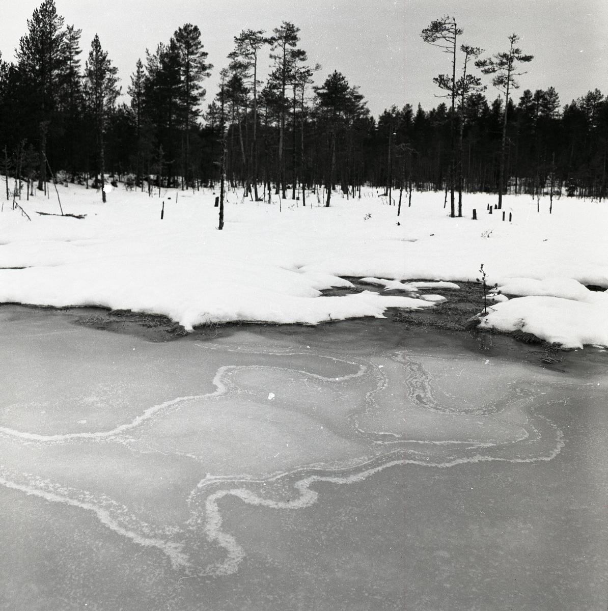 Snirkligt mönster på isen vid Vitmyren den 3 januari 1960.
