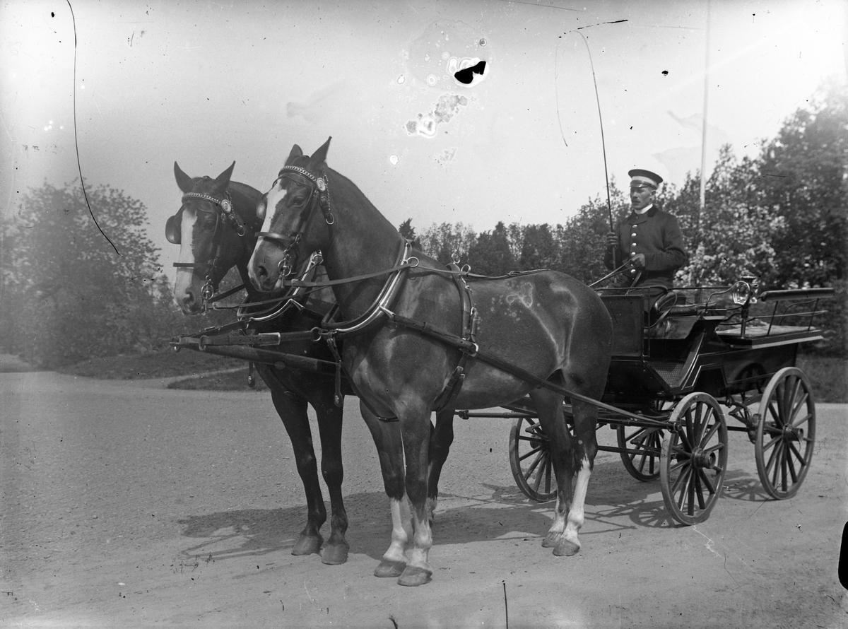 Magnusson, kusk på Österbodarne, sitter i en vagn dragen av två hästar.
