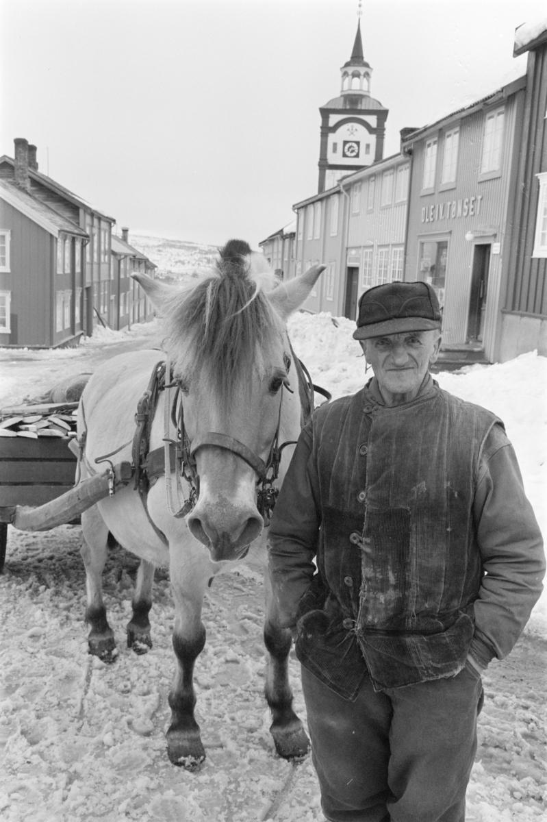 Vedkjøring med hest og vogn på Røros.