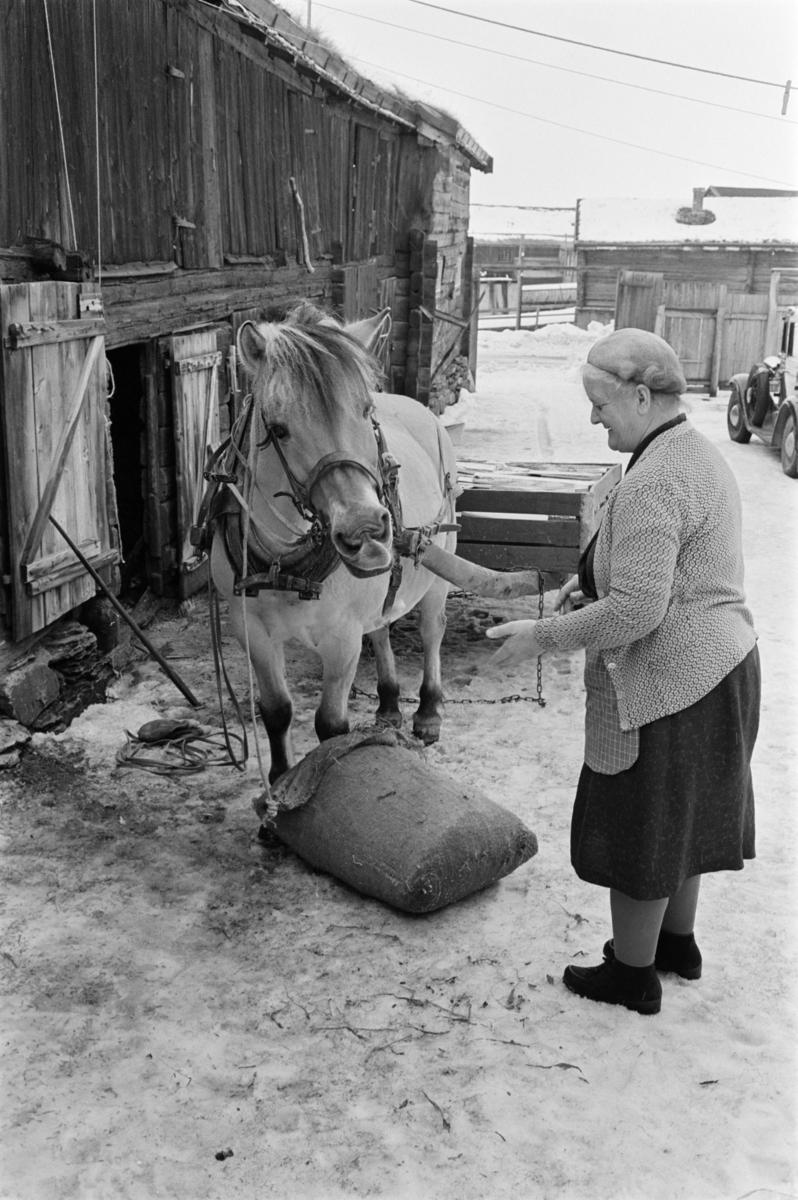 En kvinne mater en hest.