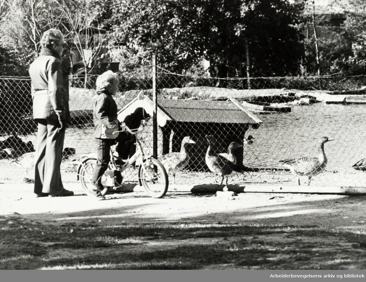 Ekeberg. Fugledammen hos Thorson. November 1978