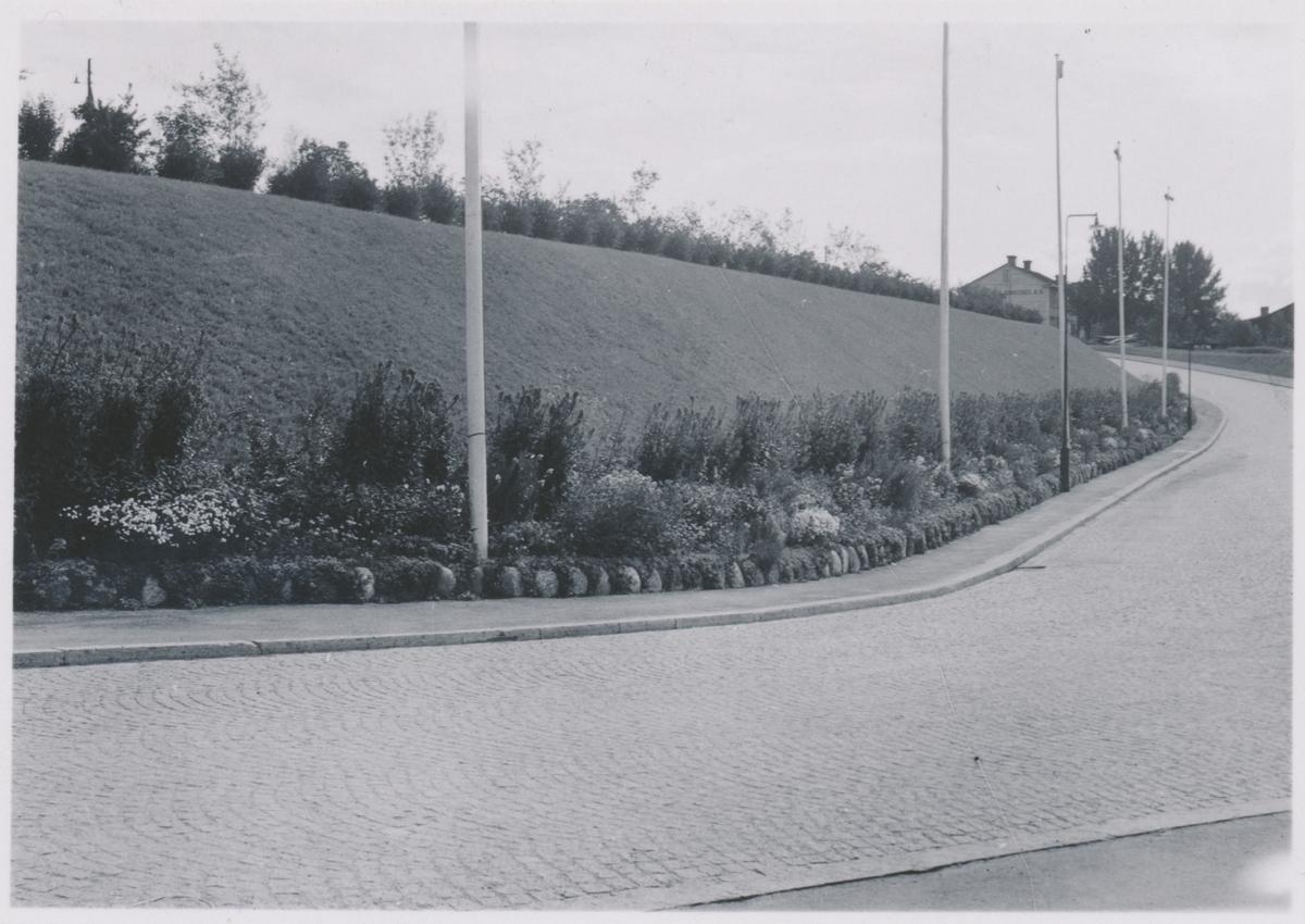 Plantering vid Östersunds station.   Namn på några växter, Aeonium arboreum, Solidago virgaurea.
