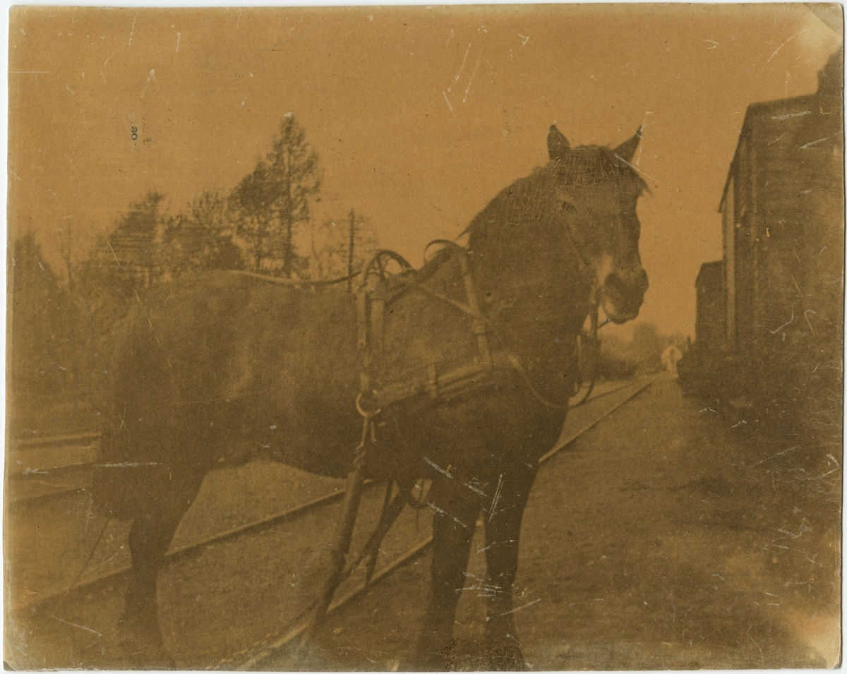Den sista hästen som användes för växling vid Arboga station.