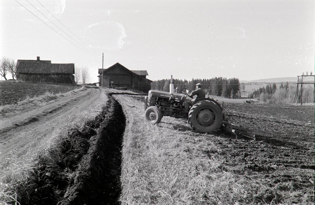 Ophus gård, Vang H. Gnr.188. Våronn, pløying, traktor,