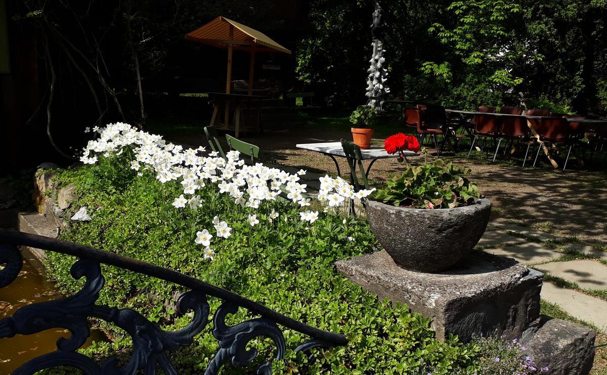 Skogsymre ved hestebassenget. Foto: AGC (Foto/Photo)