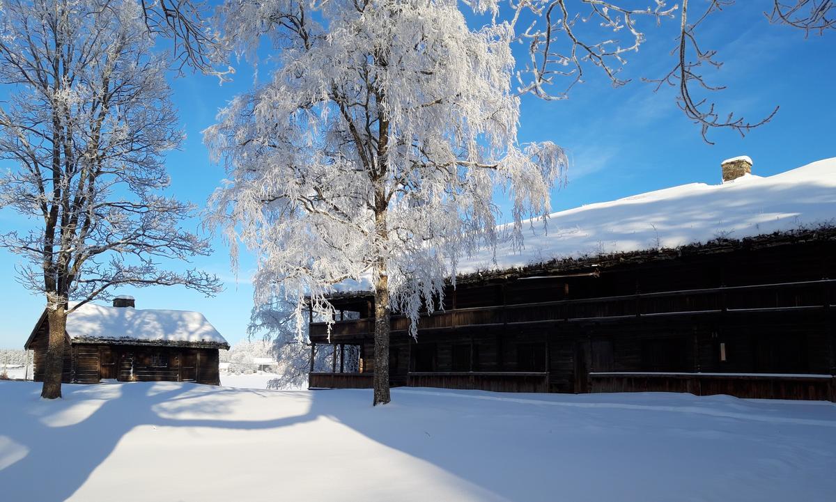 Svalgansbygning vinter 2019 cropped