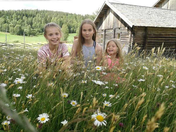 Blide jenter i sommerenga på Almenninga (Foto/Photo)
