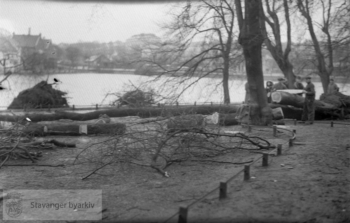 Nedblåste trær ved Breiavatnet.