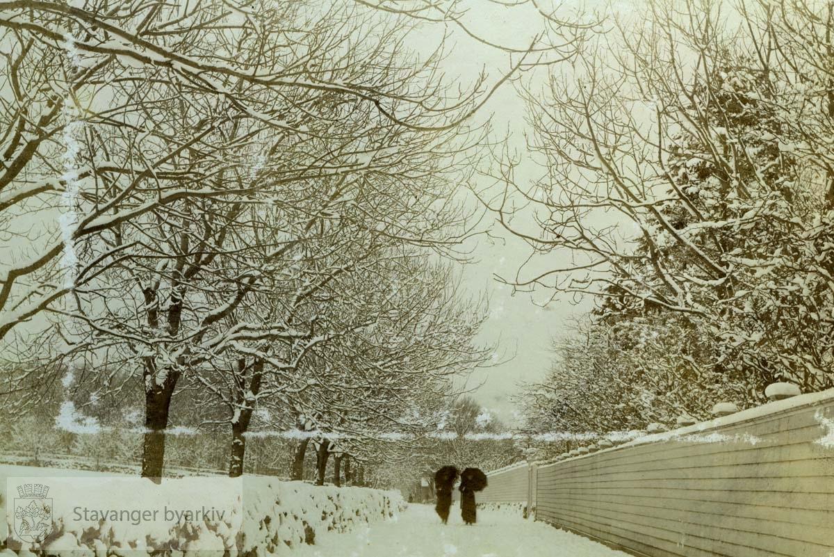 Hagen dekket av snø.