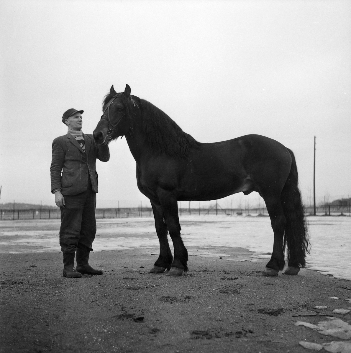 Hermann Nilsen med hingsten Pamin