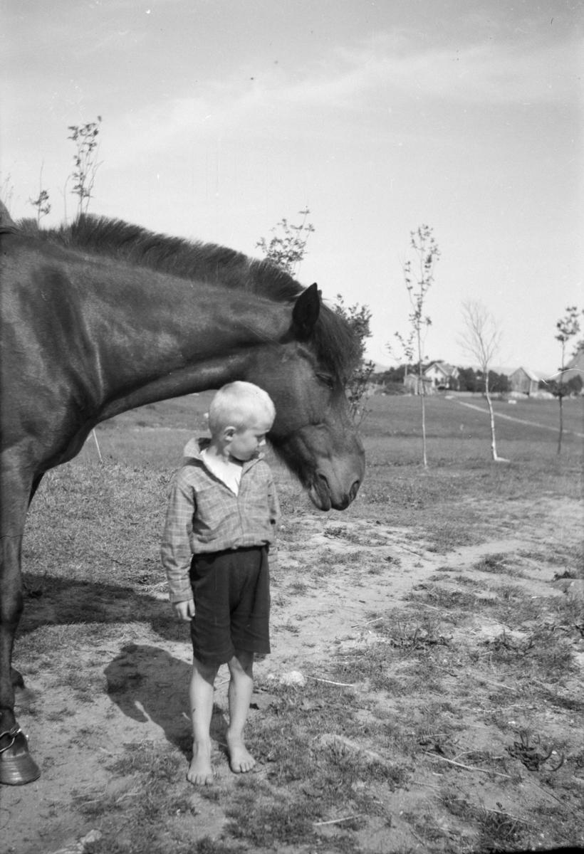 Gutt med hest