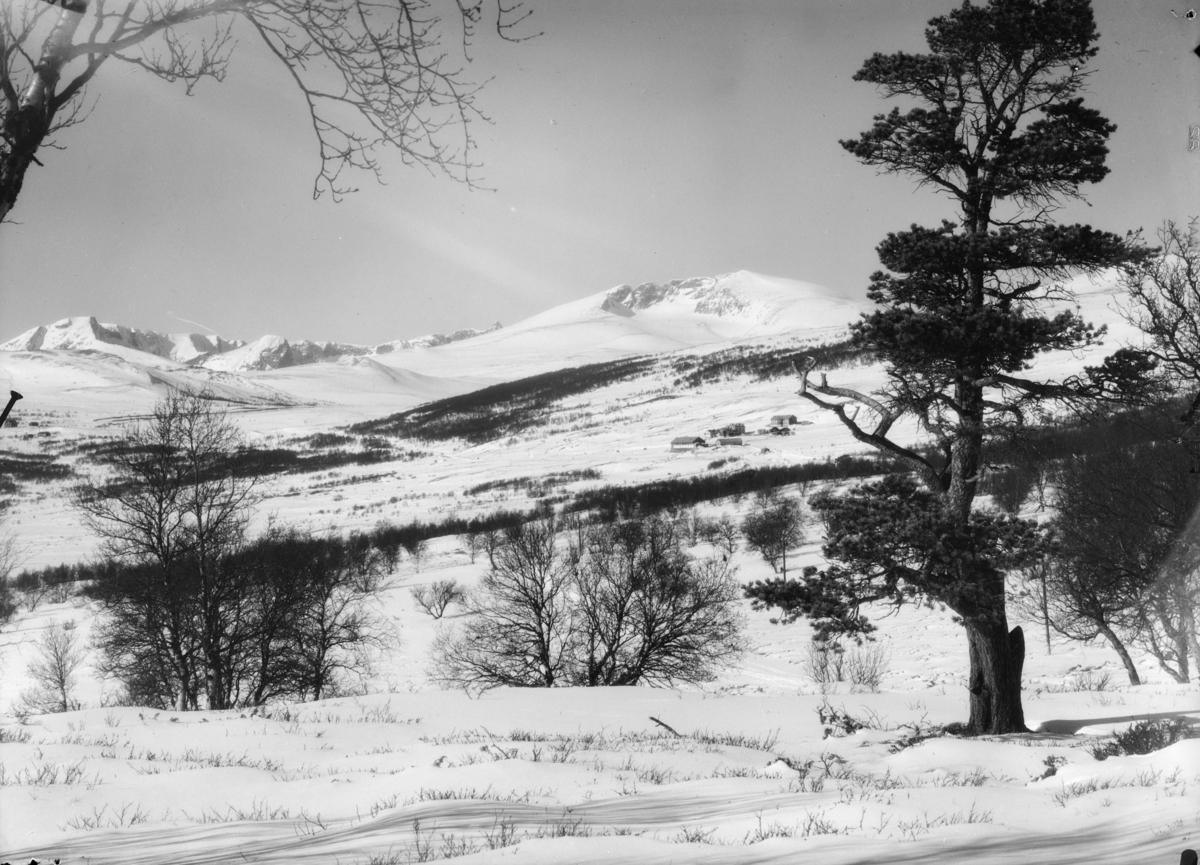 Vinterbilde Dovrefjell, mot Hjerkinn Fjellstue med Snøhetta rett bak og Svånåtindan til venstre
