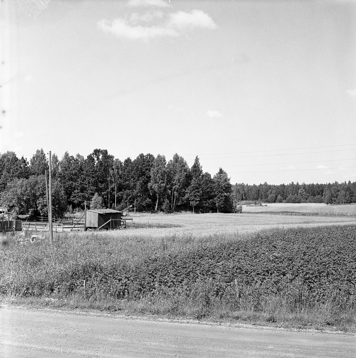Dansbanan (till vänster i bild) i Algots hage, Tyringe. Plats för Säterbo skjutbana? När dansbanan var uttjänt, användes platsen (strax intill dansbanan, närmare stora vägkorsningen) som Säterbo skjutbana.