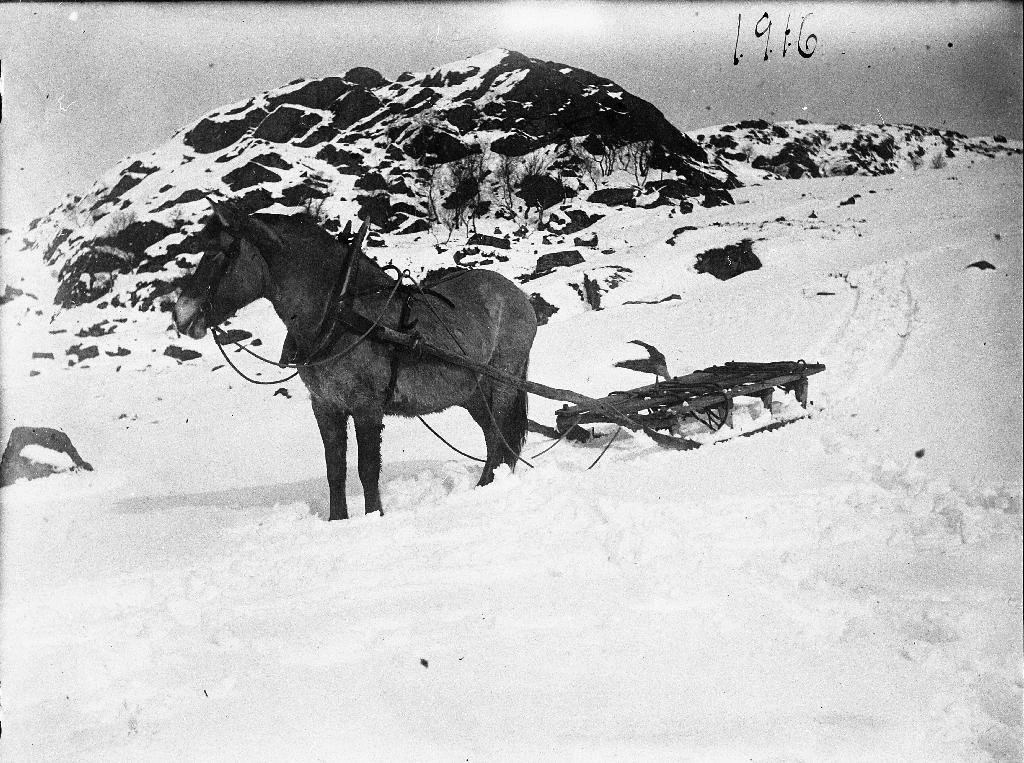 """Ein vinterdag i Sælandsfjellet 2. premievinnaren """"Helga""""."""