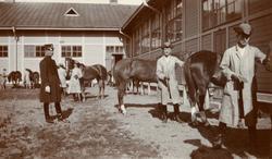 Ryktning av hästar utanför stallet, Kavalleriskolan.