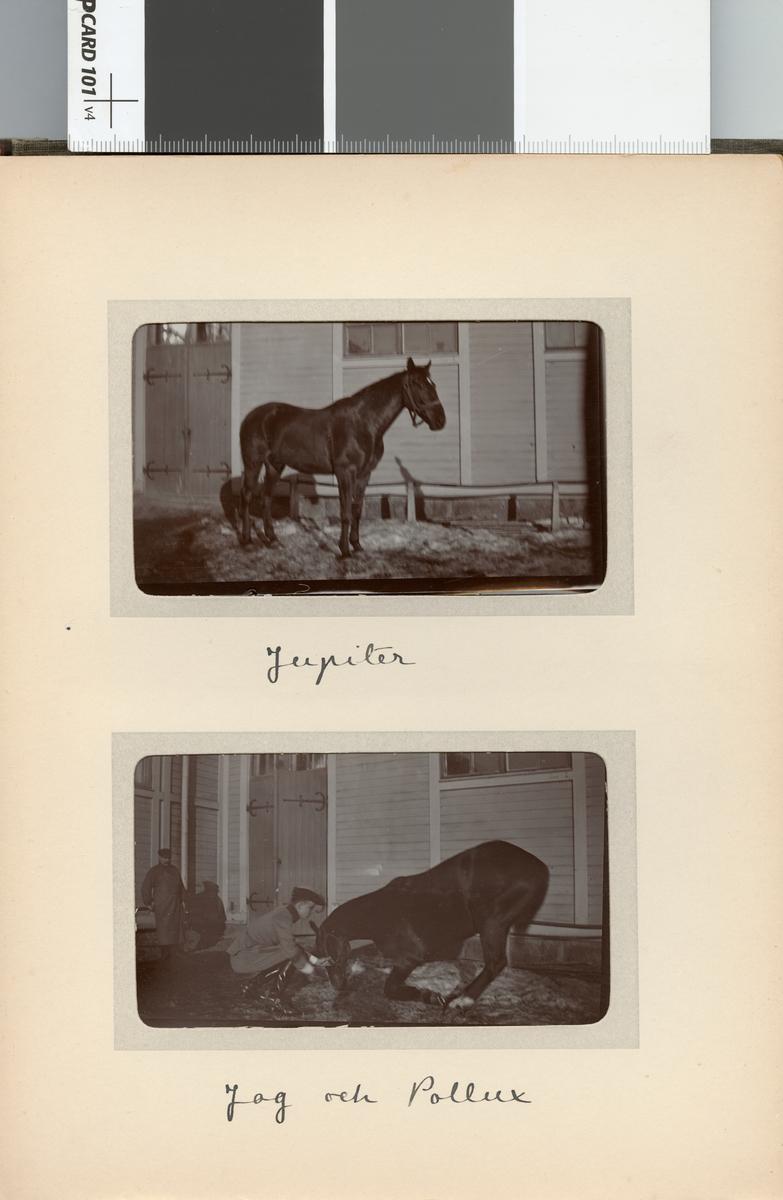 Carl Bernadotte af Wisborg och hästen Jupiter, Kavalleriskolan.