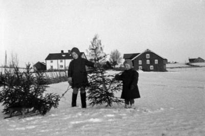 Svart-hvitt fotografi av to barn som står i snøen og har hentet juletrær. Det ligger et tre på bakken ved siden av dem, og så holder de ett tre mellom seg. I bakgrunnen ses et hvitt gårdshus og en låve.. Foto/Photo