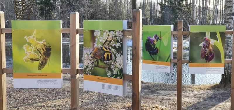 Foto av uteutstilling om pollinerende insekter