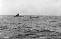 Prot: Lofotfiske