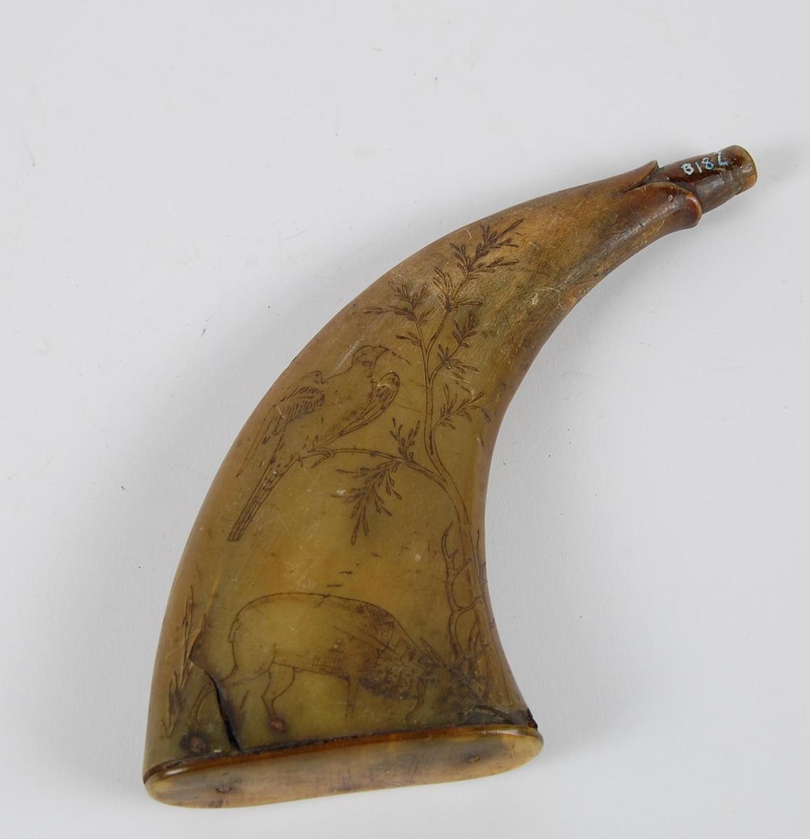 Flatt krutthorn med risset dekor. På ene siden motiv av et tre, påfugl på  grein, og hjort som feier horn. På den andre siden er det motiv av trommer, hauker, flintlås, sabel, hellebarder og spyd. Bunnplaten er av horn. Munningen er delvis formet som et dyrehode (åpen kjeft). Hornet mangler propp.