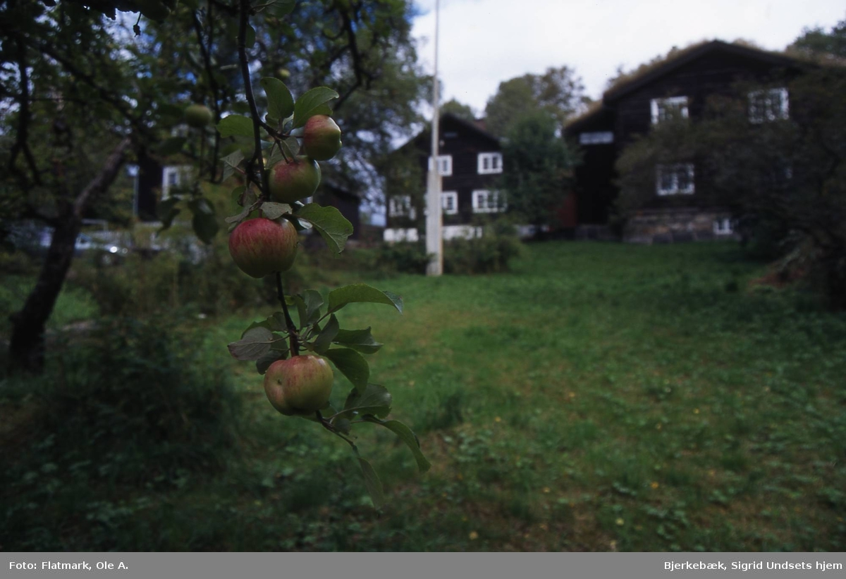DOK:2000, hus, hage, epletre,