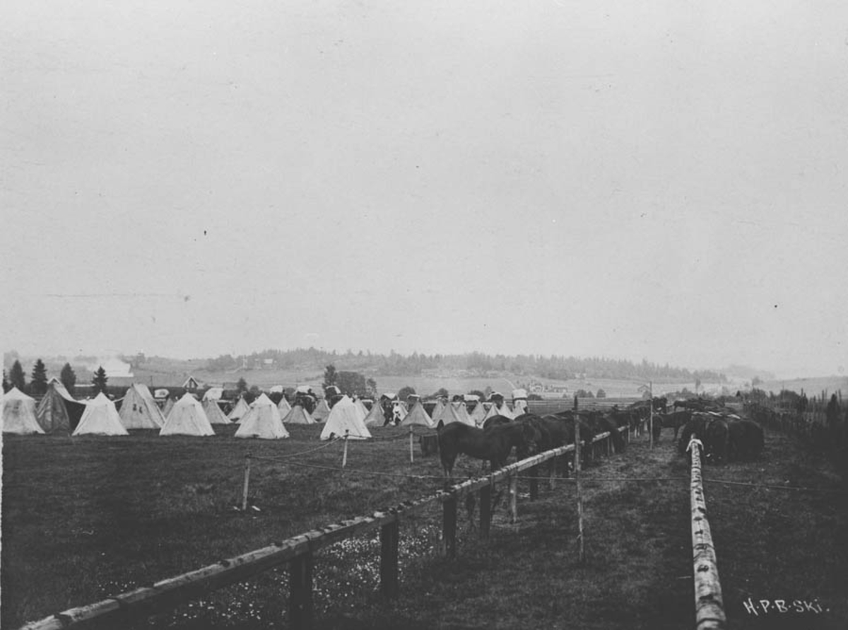 Telt og hester i forbindelse med manøvren 1912.