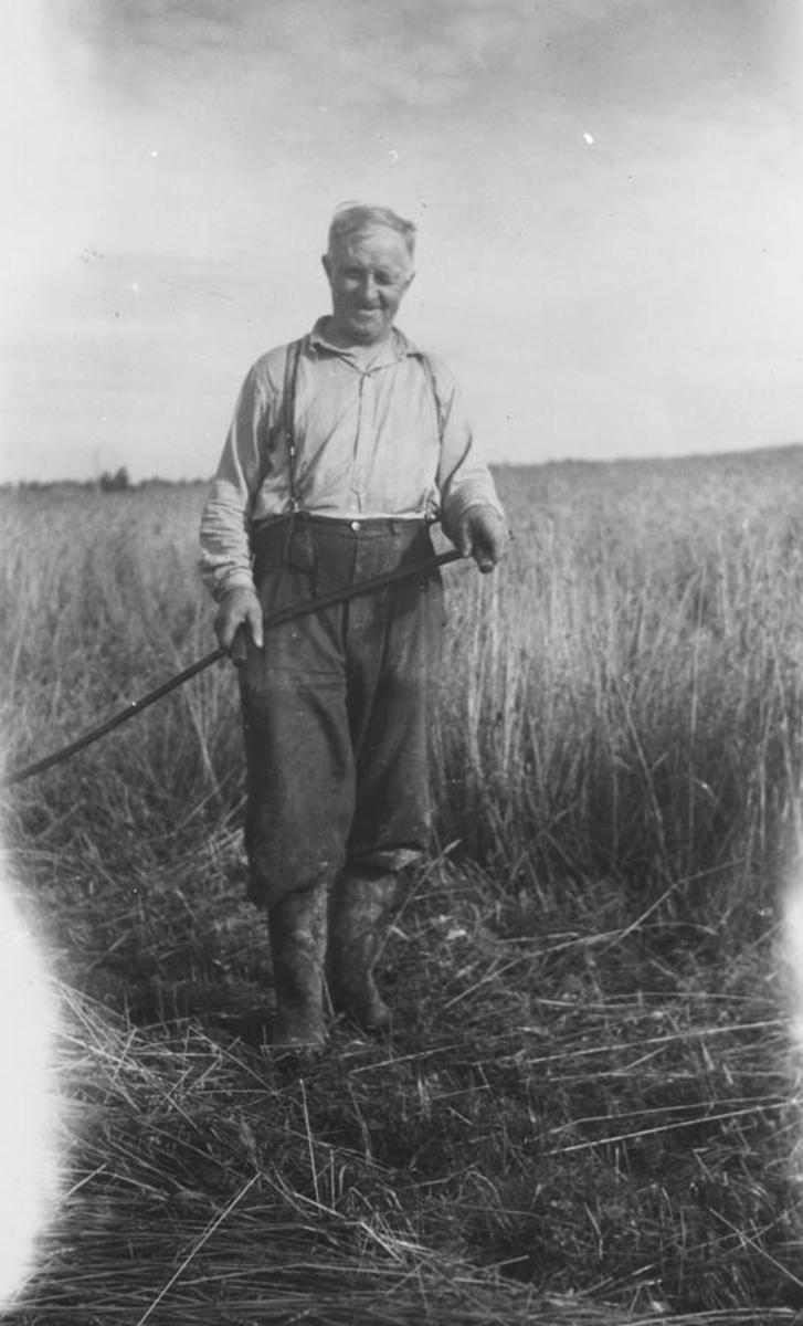 Kristian Lien, f. 1890 skjærer kornet  med ljå, da det var så vått.