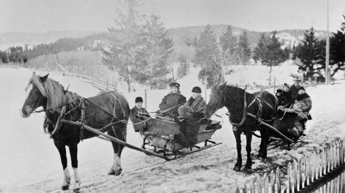 To hester i bruk til kanefart personer sitter på, vinterskog