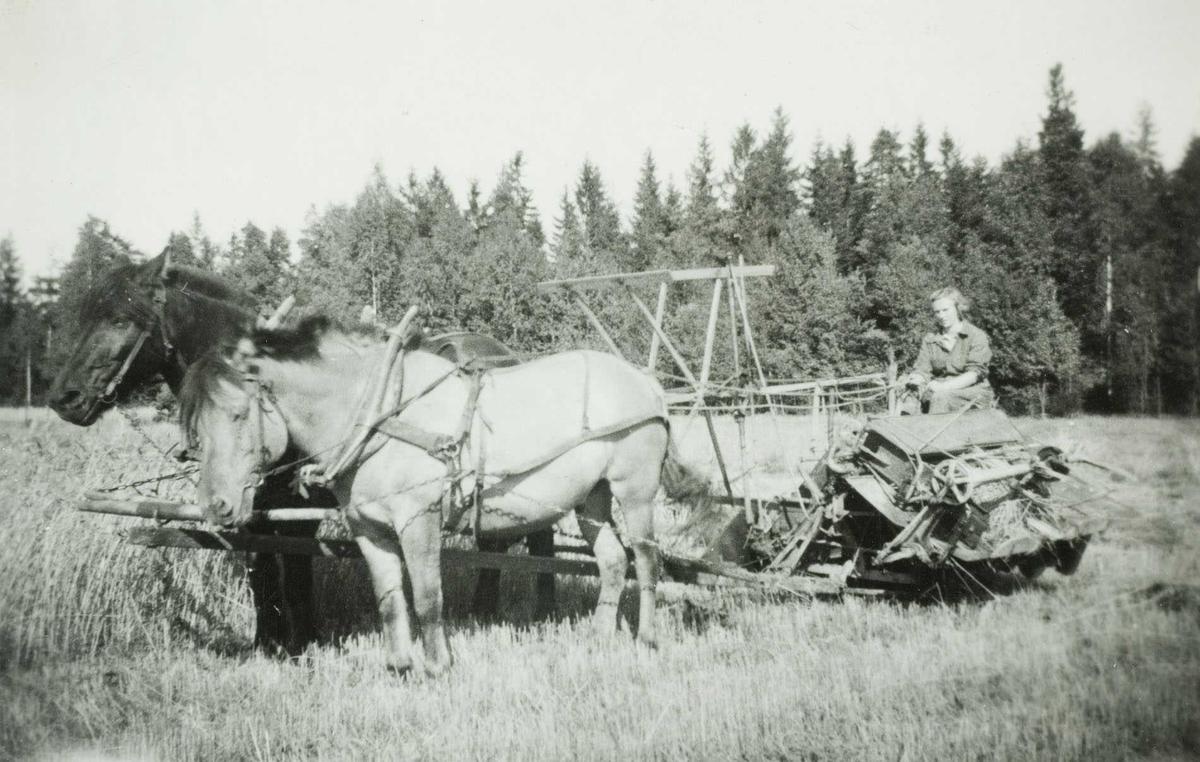 Onnearbeid i 1950 åra