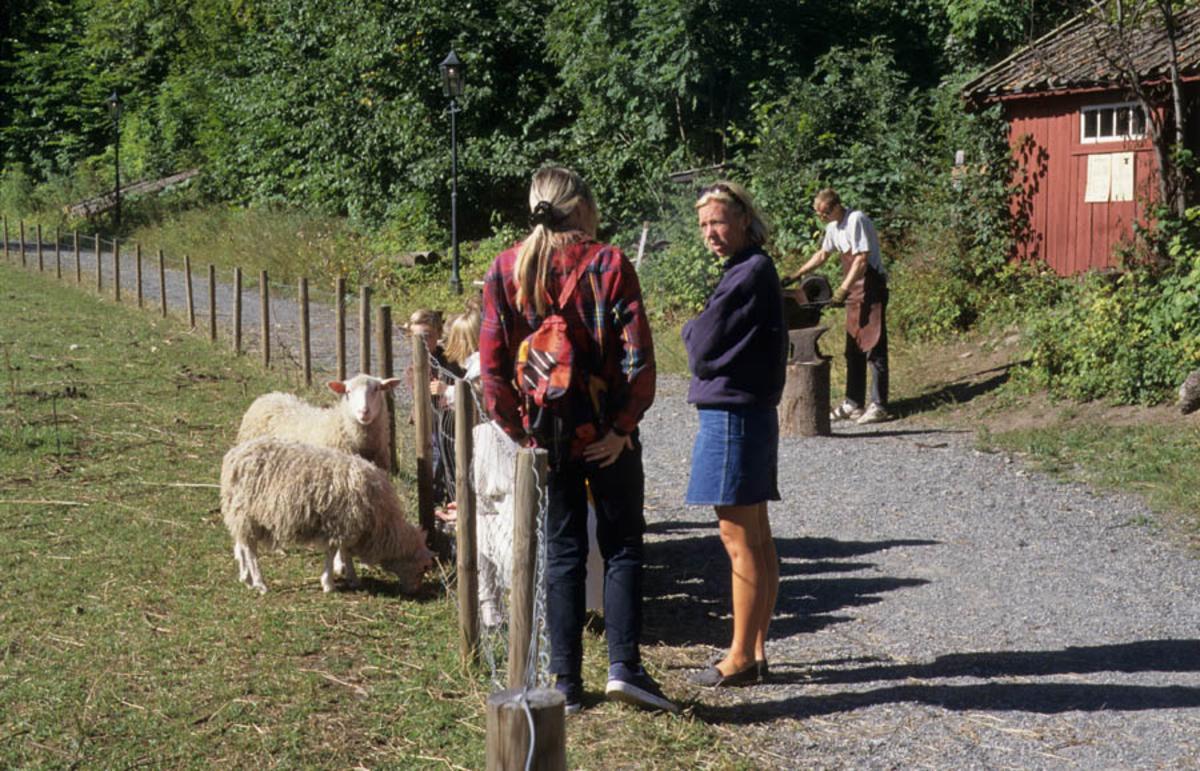 Arrangement ved Asker museum. Mennesker og dyr i landskap. Sauer på beite, smed i bakgrunnen.