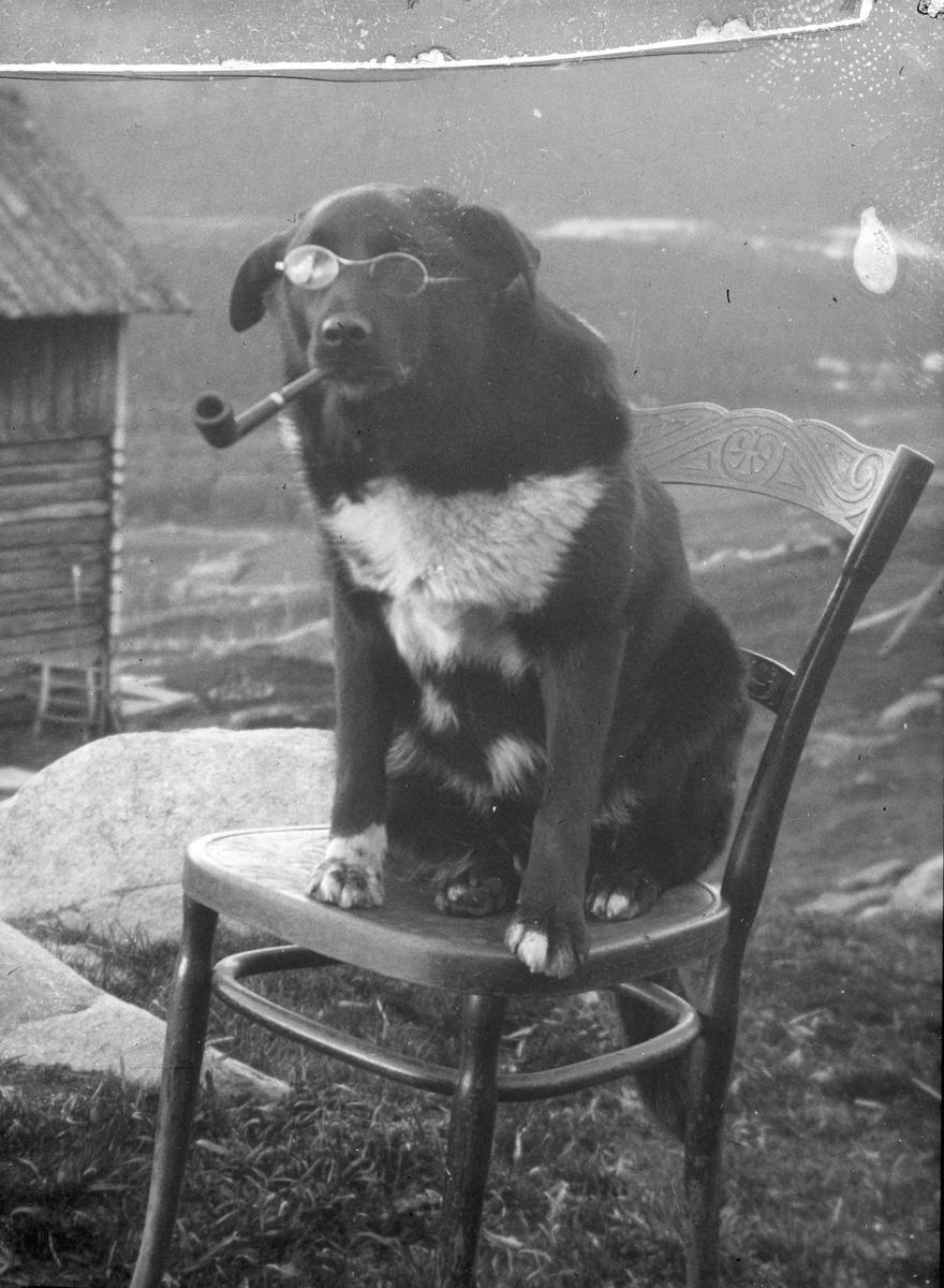 Hund.