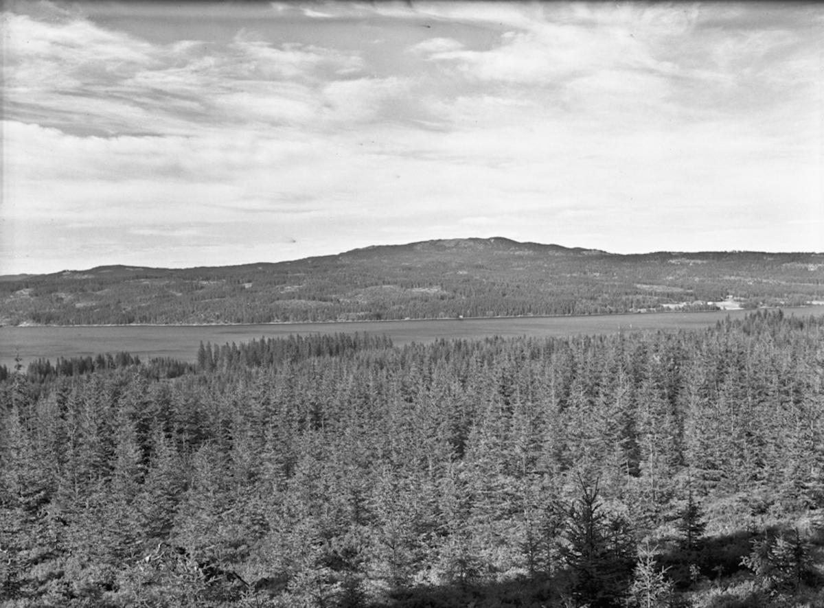 Skoglandskap ved sjø.