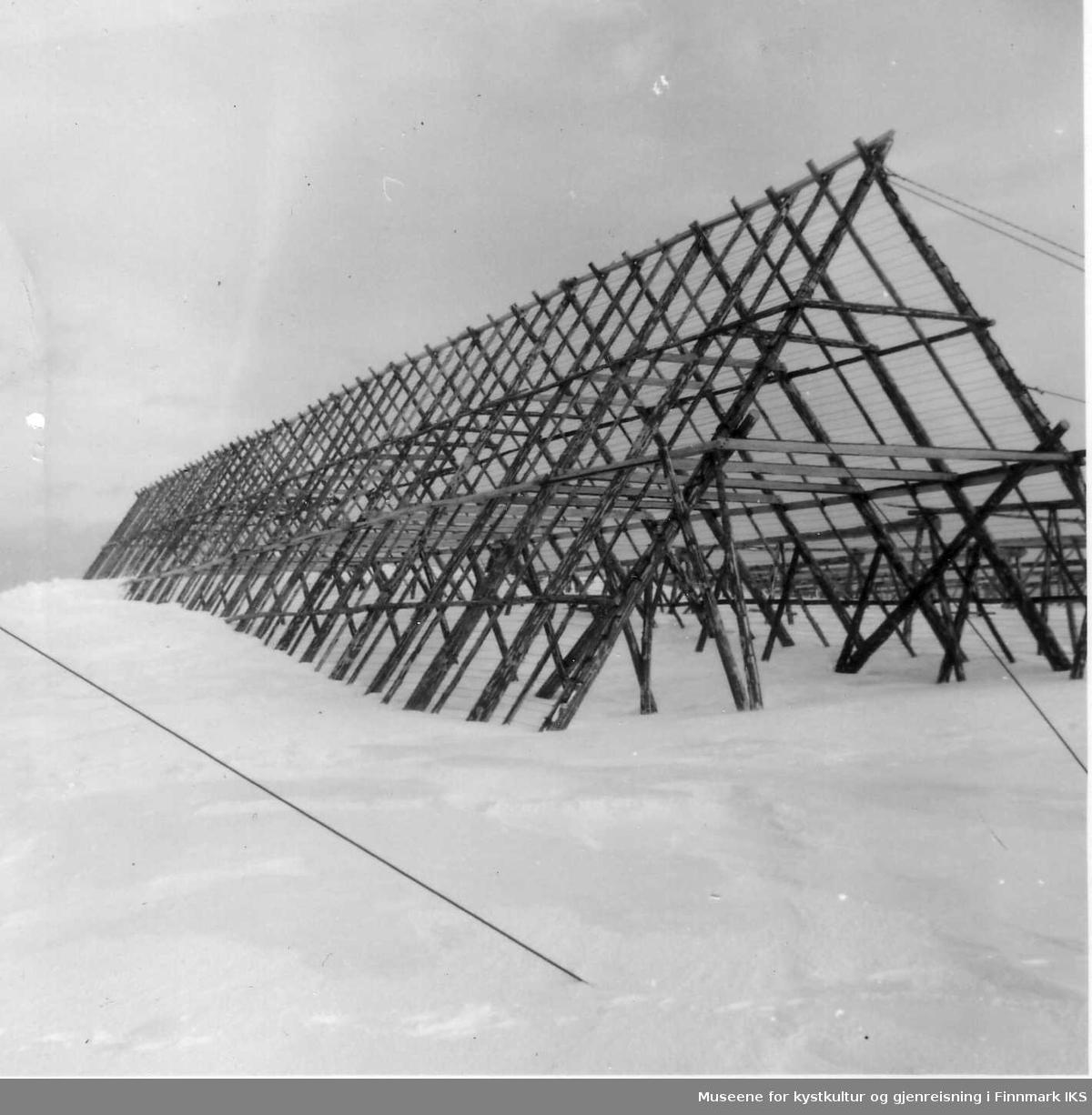 Thorleif Hammers seihesje på Iversenraet. Seihesjene var ca 9 m høye.  Dokumentasjon i forbindelse med ekspropriering i Berlevåg, 1952