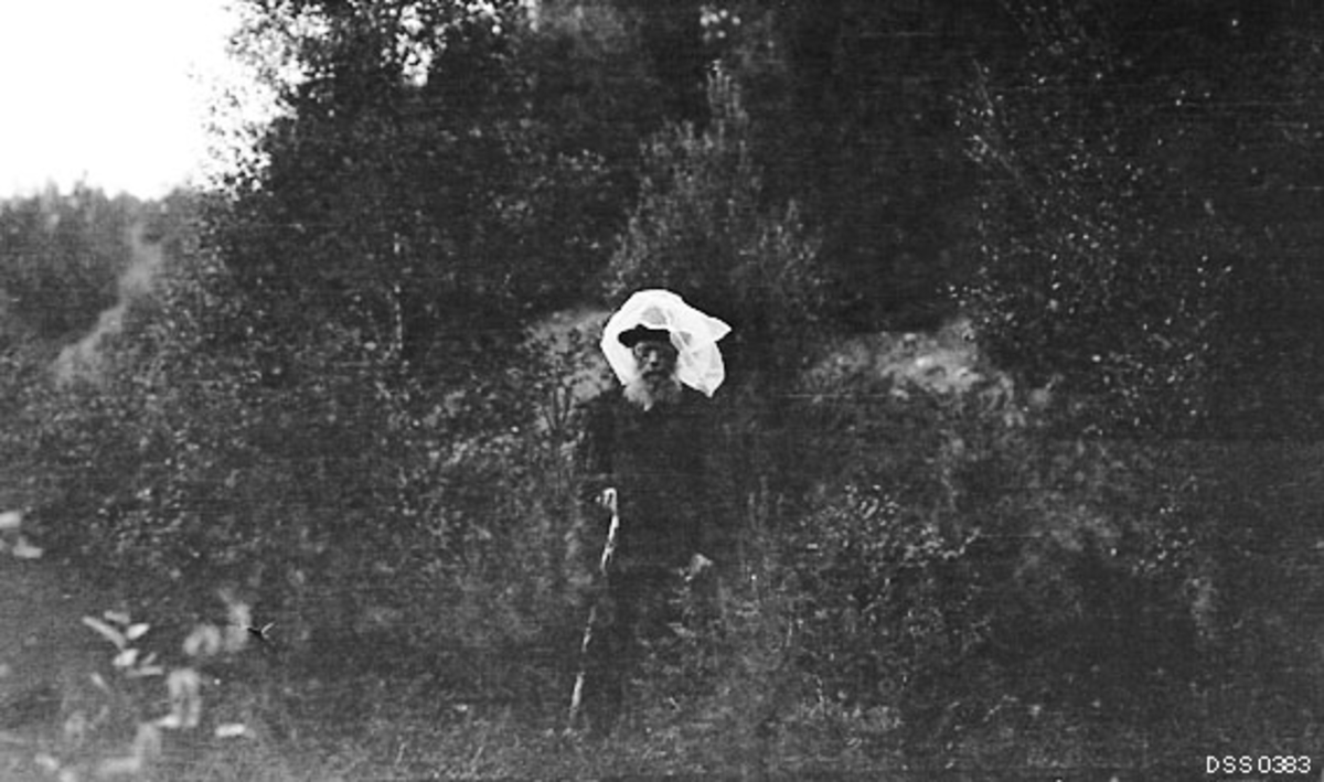 Skogfogd Peder Gjetmundsen (1855-1929) fotografert i skogen sommeren 1915, altså på et tidspunkt da denne skogfunksjonæren hadde nådd en alder av 60 år.  Han var kledd i mørk dress, hadde hatt på hodet, og over hatten var det trukket et transparent. kvitt tøystykke.   Da fotografiet ble tatt var tøystykket opptrukket, men sannsynligvis var dette en form for myggnetting som Gjetmundsen brukte for å beskytte seg mot insektplagen sommerstid.  I den ene handa holdt han en spaserstokk.  Bildet er tatt nederst i en bakkeskrent der det vokste småbjørk.  Peder [Per] Gjetmundsen var født i Hafslo i Sogn.  Han arbeidet som skogoppsynsbetjent i Talvik, fra 1903 som skogfogd i Kvænangen.