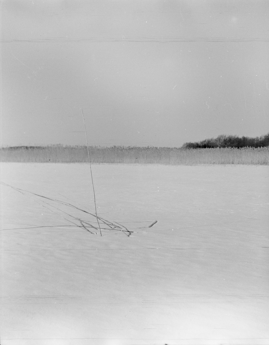 Vinter vid Mälarens strand vid Fagerudd i Enköping, Uppland 1961